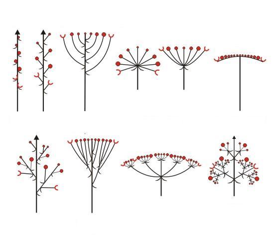 krytosemenn u00e9 rostliny